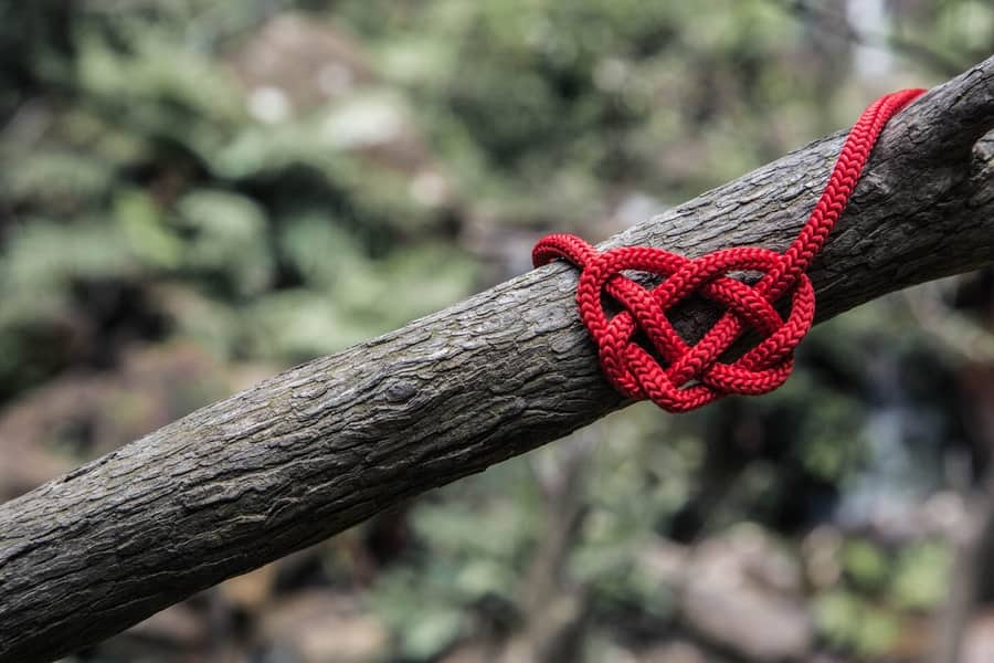 Heart shaped knot on branch